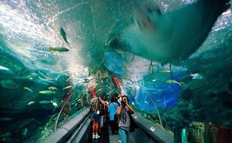 Знаменитый океанариум