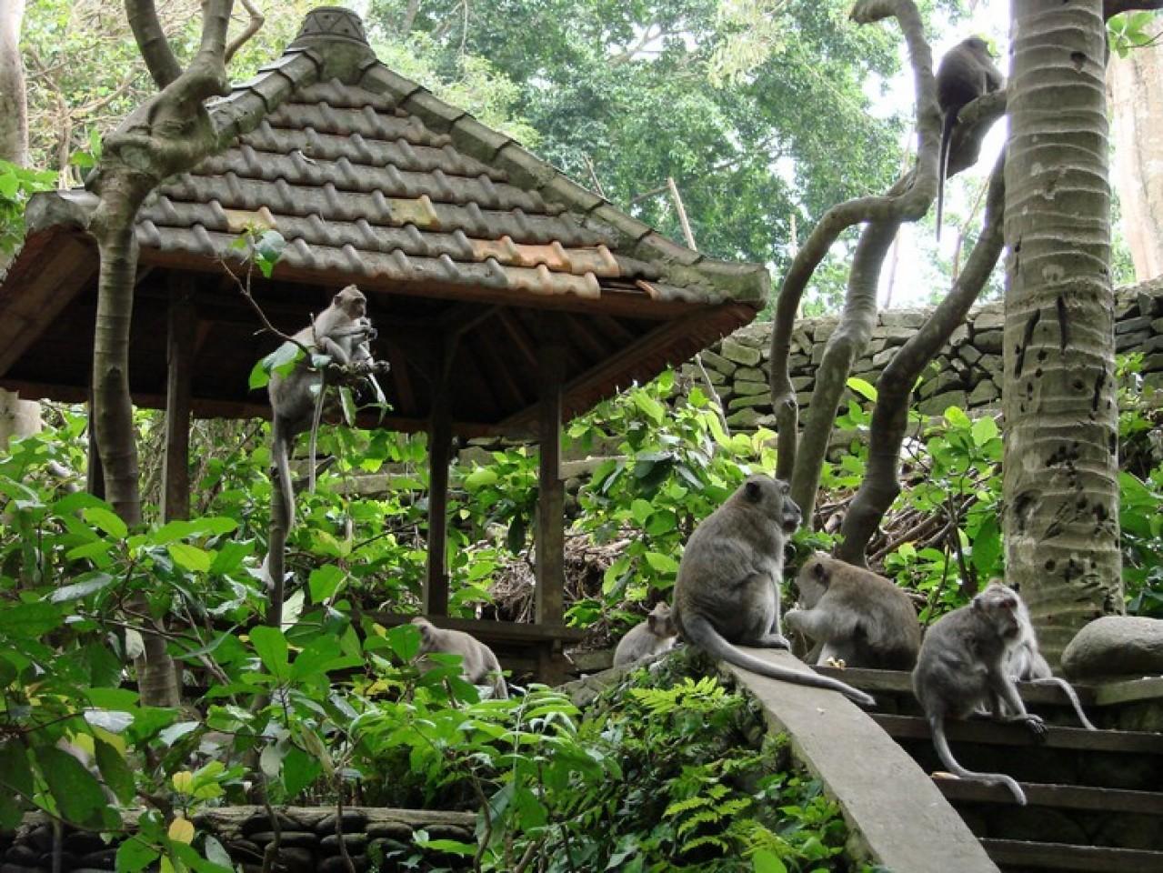 بالی یک شهر گردشگری عالی